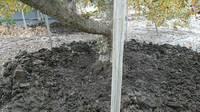半径1m半から2mぐらい泥を取り除く